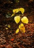 Autumn Lantern. Illustrations,woods landscape stock photo