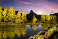 Autumn larches on the background of the Matterhorn and autumn in the Alps. Сlear water of the mountain lake Grindjisee is a local stock images