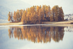 Autumn larches are reflected in alpine lake Royalty Free Stock Photos