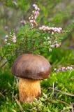 autumn lasów grzybek Zdjęcia Royalty Free