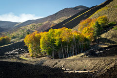 Autumn between the lava. Under Etna volcano Royalty Free Stock Photos