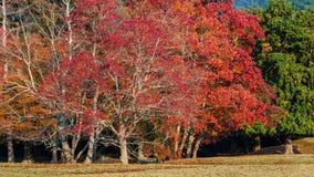 Autumn Laves Fotografering för Bildbyråer