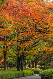 Autumn Laves at Hiroshima Central Park in Japan Royalty Free Stock Images