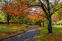 Autumn Laves at Hiroshima Central Park in Japan Stock Photography