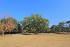Autumn Laves at Hiroshima Central Park in Japan Royalty Free Stock Image
