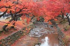Autumn Laves på Nara Park i Nara Arkivbild