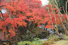 Autumn Laves på Nara Park i Nara Fotografering för Bildbyråer