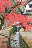 Autumn Laves på Nara Park i Nara Royaltyfria Bilder