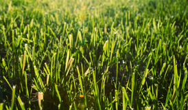 Autumn lawn Stock Image