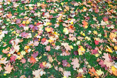 Autumn lawn Stock Images