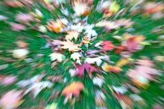 Autumn lawn Stock Photos