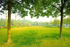Autumn lawn. Shining in the sun, the beauty of autumn colors lawn Royalty Free Stock Photography