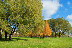 Autumn lawn in city square. Yellow larches, green willows, the blue sky stock image