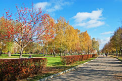 Autumn lawn in city square. Yellow trees, red bushes, footpath, the blue sky Stock Images