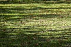 Autumn lawn with morning shadows stock image