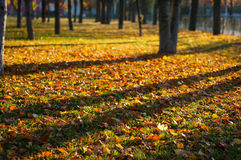 Autumn lawn Royalty Free Stock Image