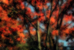 Autumn Layered Abstract. A blurred abstract photograph of autumnal trees with a second photograph of a closeup of autumn leaves layered over top and blended royalty free stock photo