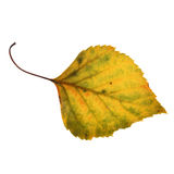Autumn leaf Stock Photography