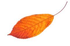 Free Autumn Leaf Stock Photography - 10646182