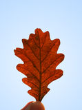 Autumn Leaf. A hand held autumn leaf royalty free stock image