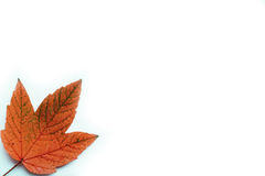 Autumn_leaf Stockbilder