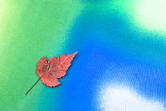 Autumn leaf. Red leaf arranged on colorful textured background Stock Photography