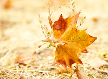 An Autumn leaf Royalty Free Stock Images