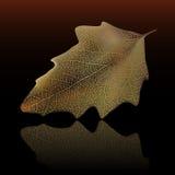 Autumn leaf stock illustration