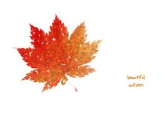 Autumn leaf. Autumn color leaf isolated on white royalty free stock photography