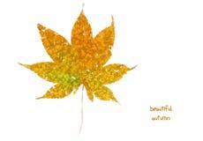 Autumn leaf. Autumn color leaf isolated on white stock photo