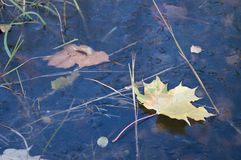 Autumn leaf. In water - close-up shot Stock Photo