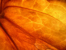 Autumn leaf Royalty Free Stock Photo