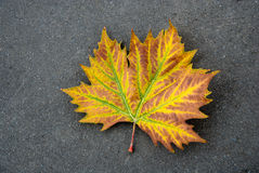 Free Autumn Leaf Stock Photography - 14667252