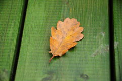 Autumn leaf. Yellow autumn leaf as a background Stock Photography