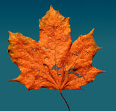 Autumn leaf. It's a photo of an autumn leaf Stock Photo