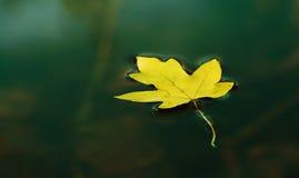 Autumn leaf Royalty Free Stock Image