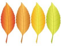 Autumn leaf 2 Royalty Free Stock Photos