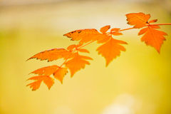 Autumn leaf. In Budapest's park, Varosliget Royalty Free Stock Photography