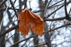 Autumn leaf. Stock Images