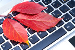 Autumn leaf. On a keyboard Stock Images
