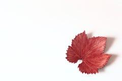 Autumn leaf. On white background Stock Photo