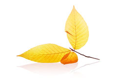 Free Autumn Leaf Royalty Free Stock Images - 2892609