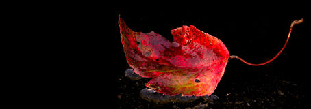 Autumn Leaf. Leaf with room for text royalty free stock photography