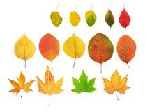 Free Autumn Leaf Stock Image - 31280381