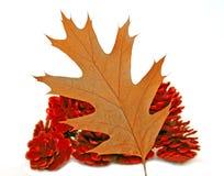 autumn leaf Στοκ φωτογραφίες με δικαίωμα ελεύθερης χρήσης