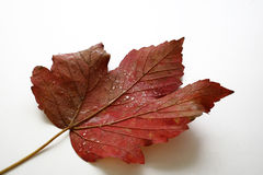 Autumn leaf Stock Image
