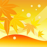 Autumn Leaf. Different level of autumn leaf with orange background Royalty Free Stock Image