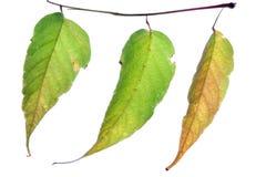 Autumn leaf stock images