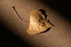 Autumn Leaf. A fallen autumn leaf in a shaft of light Stock Photo