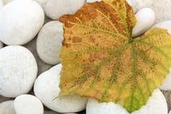 Autumn Leaf Fotografia Stock